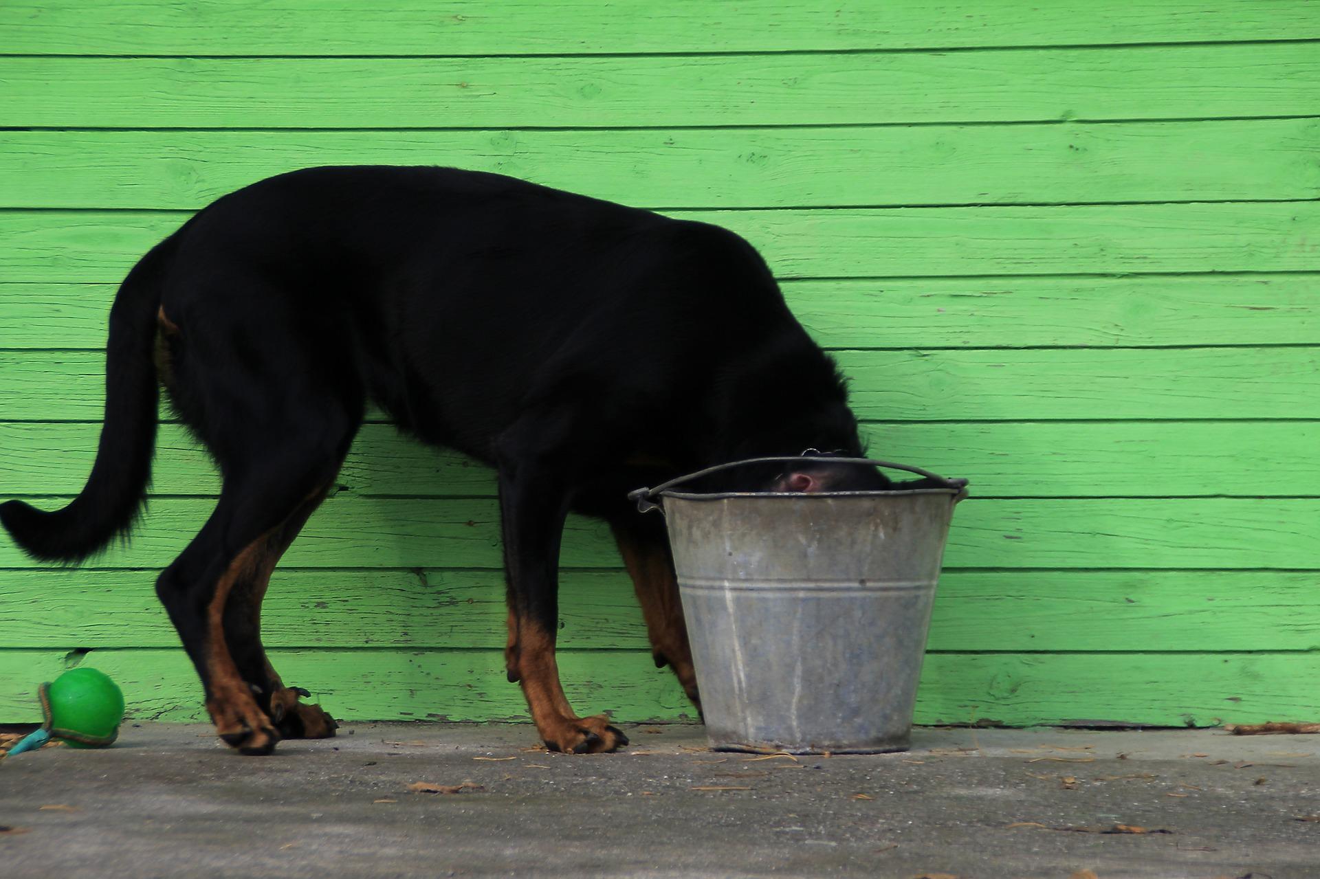 bucket-999973_1920