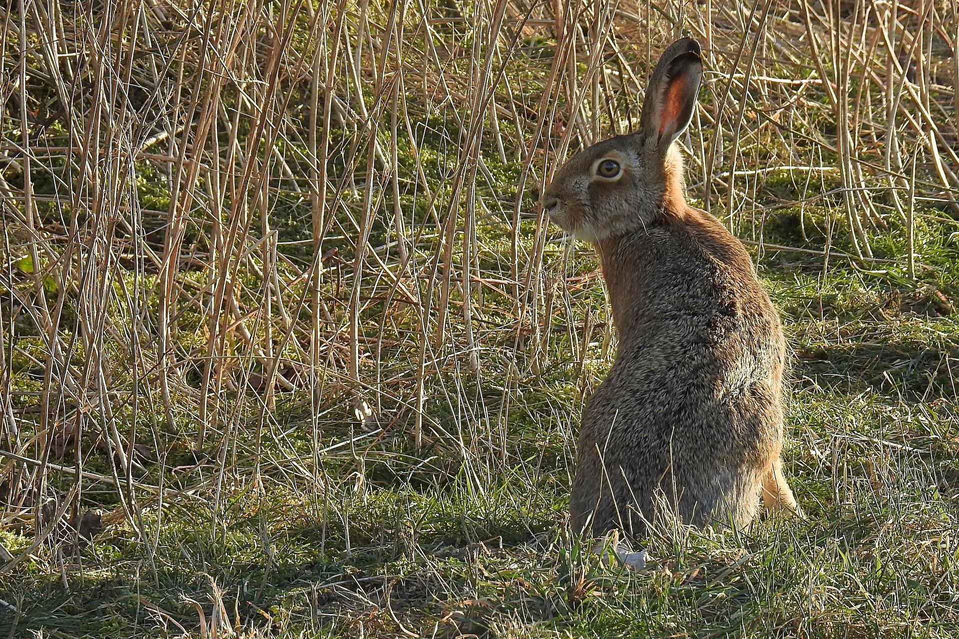 hare-3186347_1920.jpg