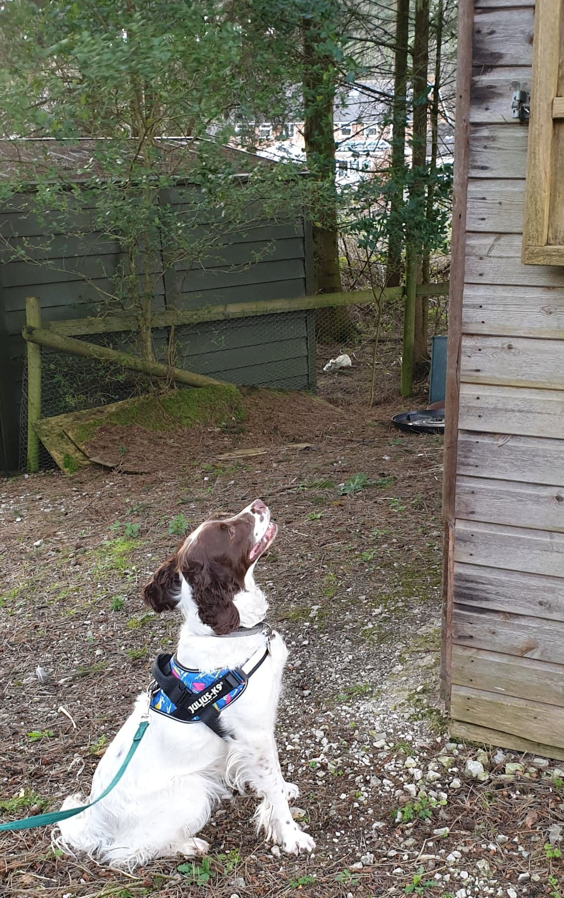 Poppy pointing towards the high hide - just follow the line of her nose!